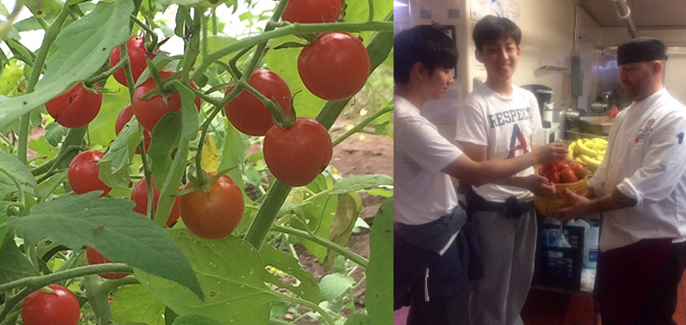 tomatoes grown in garden, students delivering produce to kitchen